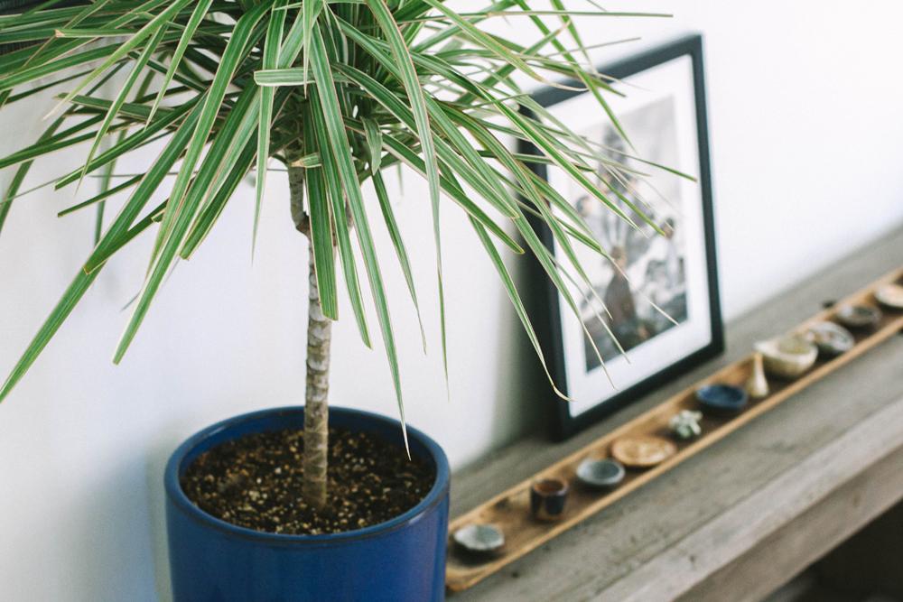 Good Bones | Plant Life