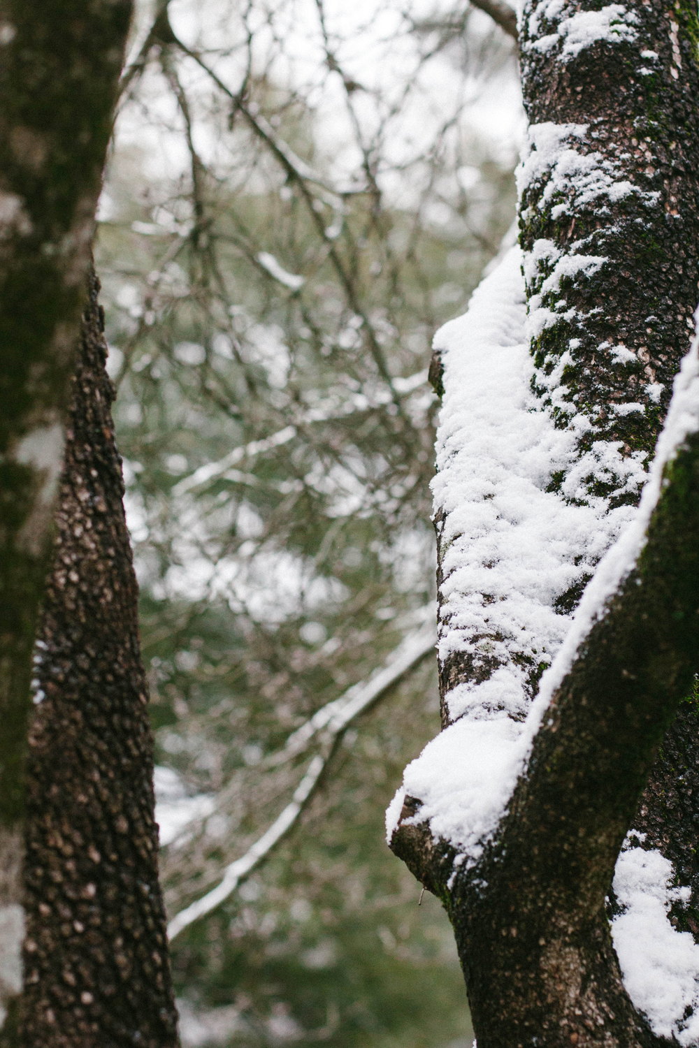 Snow, Briefly | Good Bones